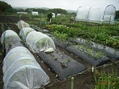 町民農園で家庭菜園