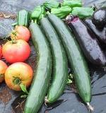 野菜の育て方一覧