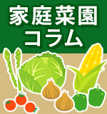家庭菜園コラム