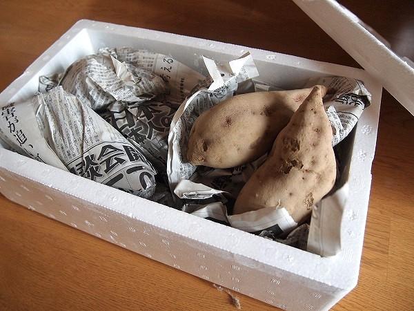 2月中旬に取り出したサツマイモ
