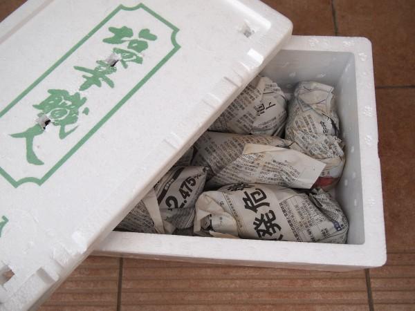 芋を一つ一つ新聞紙で包む