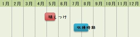 小玉スイカの栽培時期