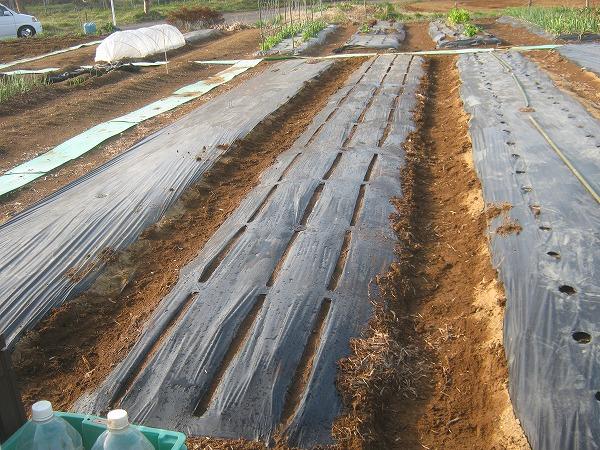 ホウレンソウを栽培する畑の準備