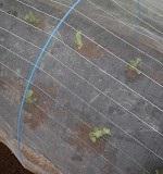 農薬を使わない病害虫防除
