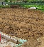 冬に種まきできる野菜