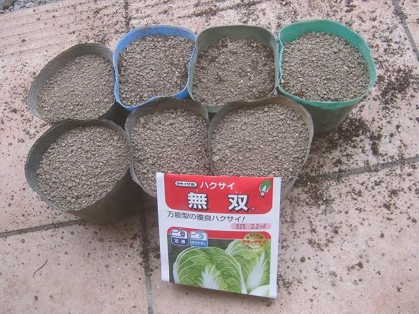 ポットで苗を作る白菜