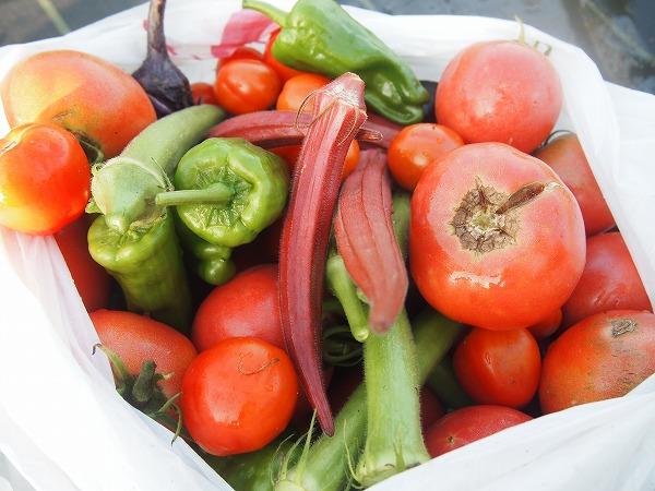 家庭菜園で育てやすい野菜
