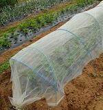 枝豆の鳥害・虫害の防除
