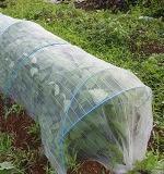 夏の枝豆栽培は害虫対策をしよう