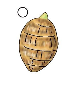 形のよい大きい種芋