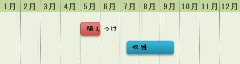 ゴーヤの栽培時期