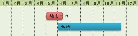 シシトウの栽培時期