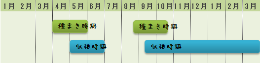 ルッコラの栽培時期