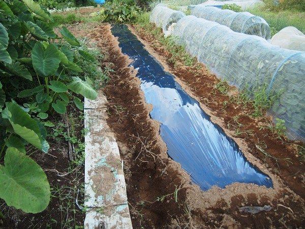 芽キャベツを植えるために準備した畝