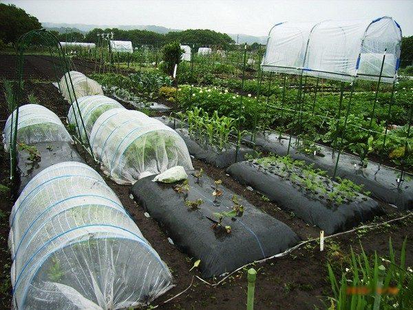 中規模菜園