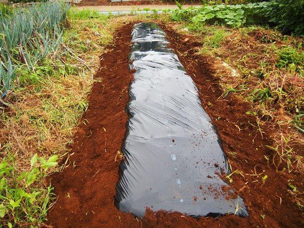 ツルムラサキを植える畝