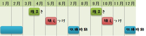 コールラビの栽培時期