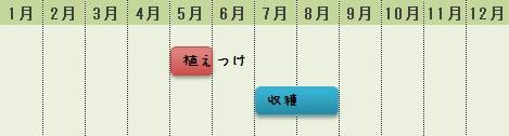 マクワウリの栽培時期