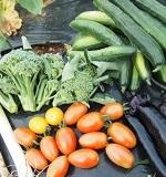 野菜選びのポイント